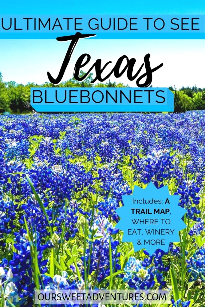 "A field of bluebonnets with text overlay ""Ultimate Guide to See Texas Bluebonnets"""