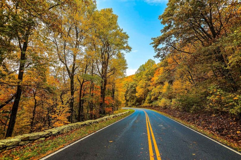 A beautiful photo of the blue ridge Parkway curving into the beyond with yellow and orange trees towering the road.
