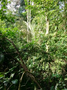 The beauty of the jungle