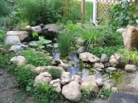 Wildlife Pond - Our Tiny Homestead