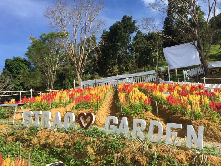 The All-New Sirao Flower Garden in Cebu: All You Need To Know