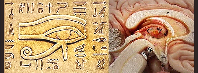 Pineal Gland Natural Remedies