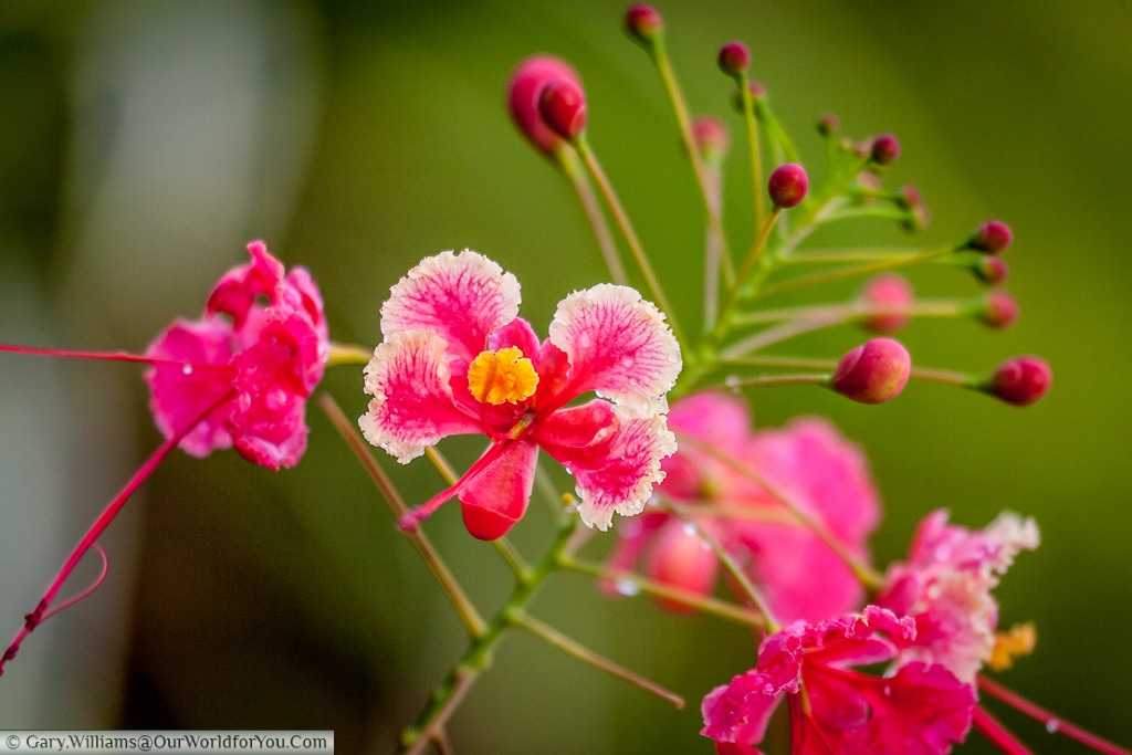 The detail in this beautiful example of the stunning flora abundant in Costa Rica is breath taking.