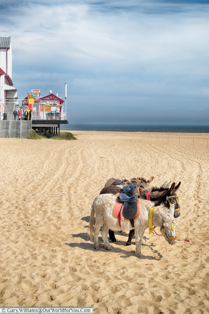 Donkey rides on the beach - for the little ones, Great Yarmouth, Norfolk, England, Great Britain