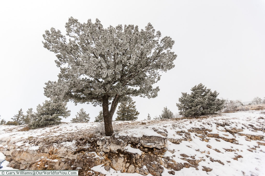 Chilly on top of Sandia Crest, New Mexico, America, USA