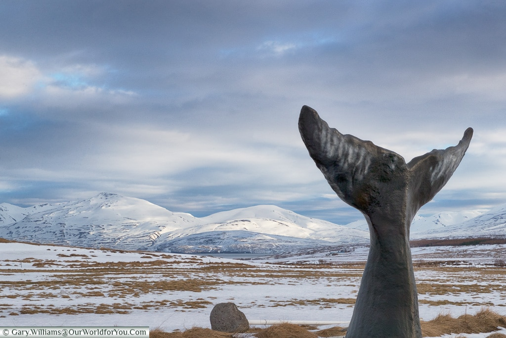 A monument to the whale, Iceland