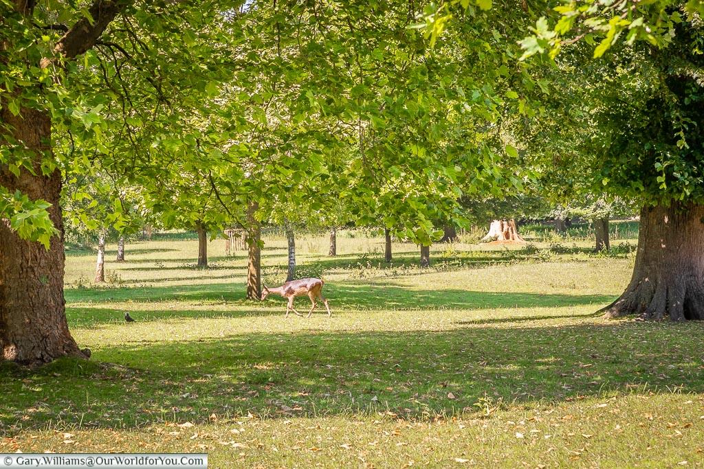 The Deer Park of Magdalen College, Oxford, England, UK