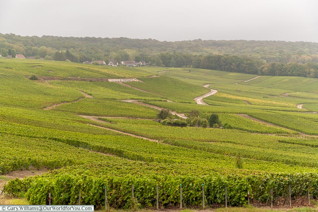 Vineyards just outside Hautvillers, Champagne, France