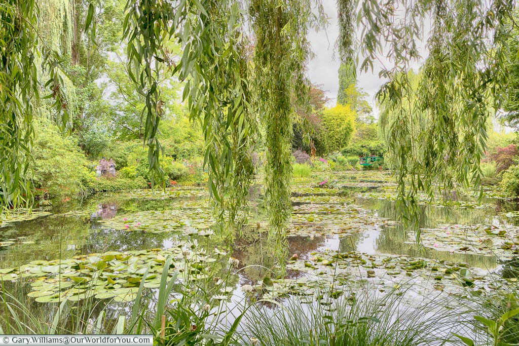 Peeking through to the lily pond, Giverny, Normandy, France