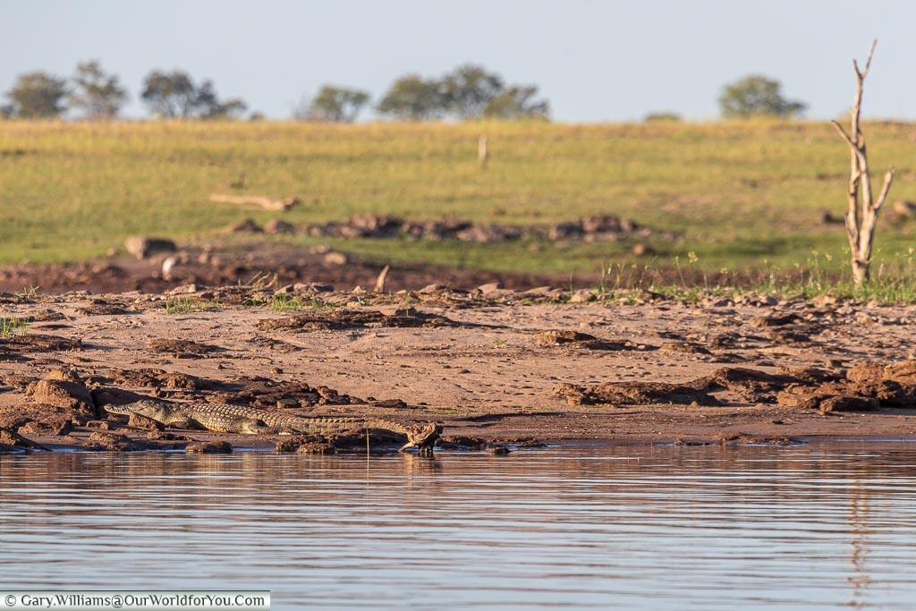 Did someone say Crocodile?, Sundowner cruise, Rhino Safari Camp, Lake Kariba, Zimbabwe