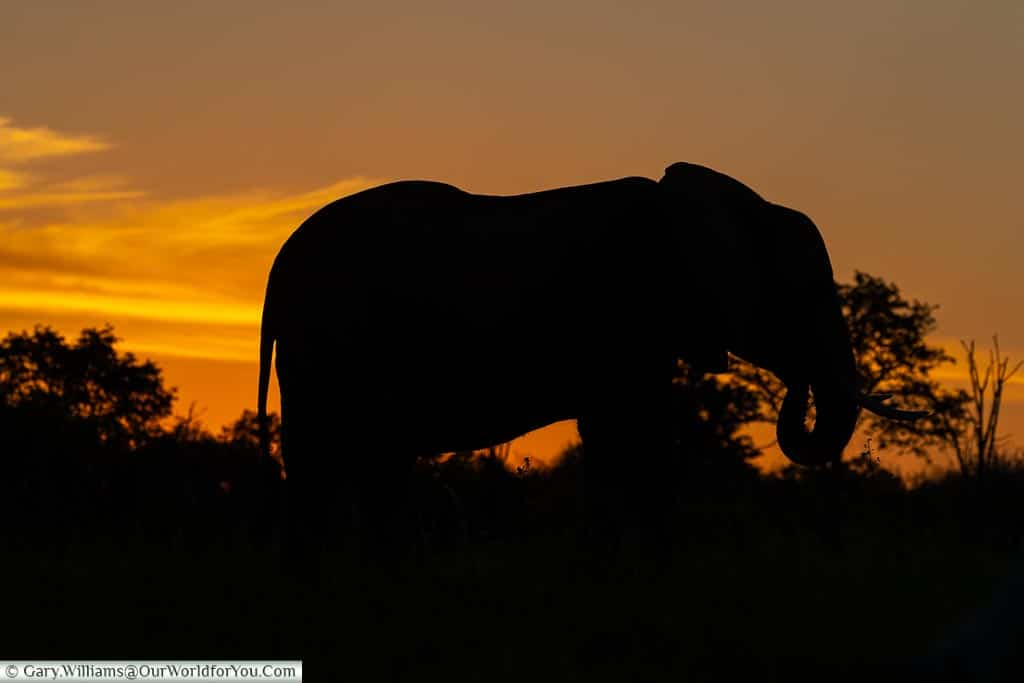 Elephant in Silhouette, Sundown safari drive, Rhino Safari Camp, Lake Kariba, Zimbabwe