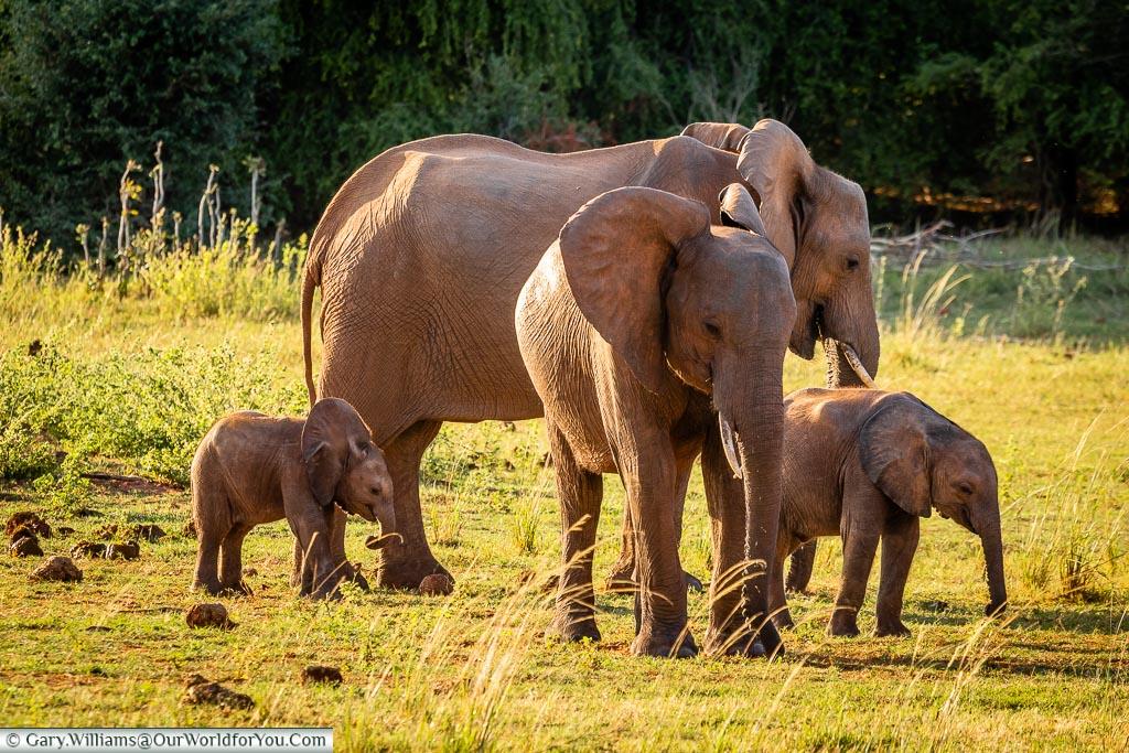 Elephants in all sizes, Rhino Safari Camp, Lake Kariba, Zimbabwe