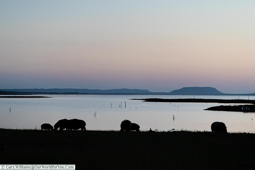 Hippos in silhouette, Sundown safari drive, Rhino Safari Camp, Lake Kariba, Zimbabwe