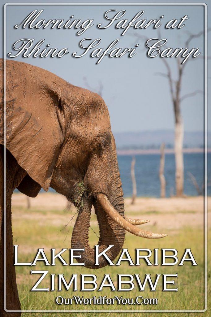 Morning Safari at Rhino Safari Camp, Lake Kariba, Zimbabwe
