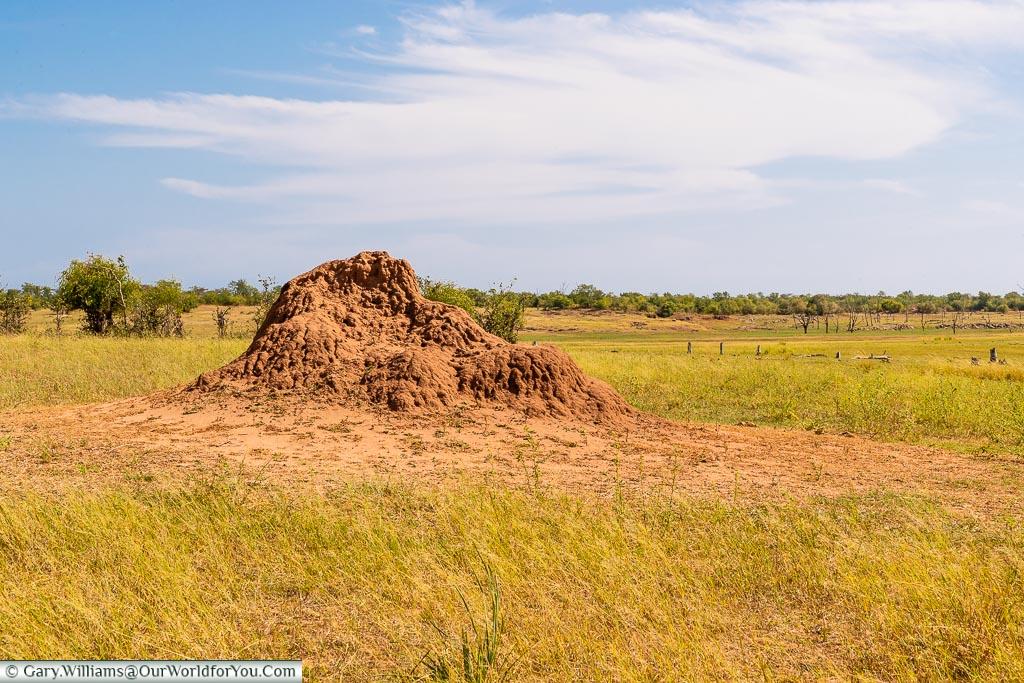 Termite mound, Rhino Safari Camp, Lake Kariba, Zimbabwe