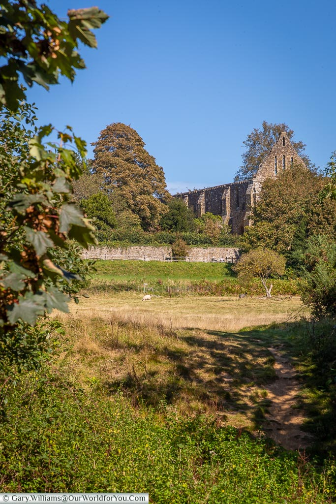 Looking through the foliage, across the battlefield toward the Abbey ruins.