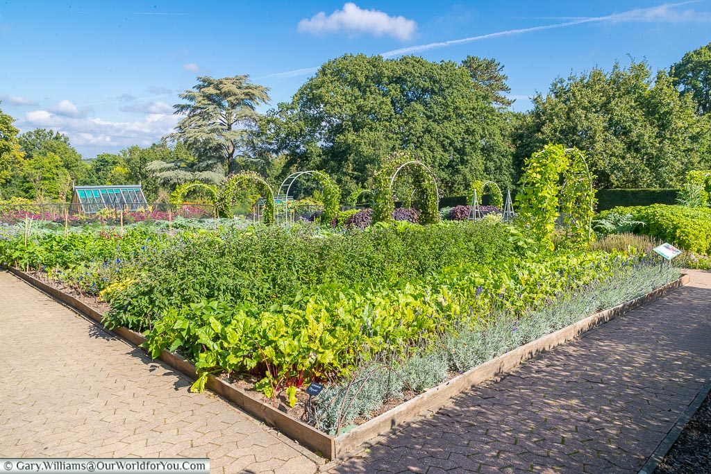 The vegetable garden planted out in neat rows.