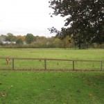 Take a Walk – Westmoor Park Trails