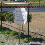 Pick Your Own Strawberries at Rose's Berry Farm in Glastonbury