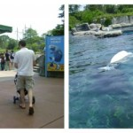 Explore the Sea at Mystic Aquarium