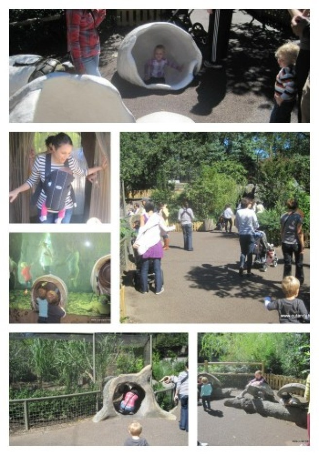 Interior of Children Zoo Collage