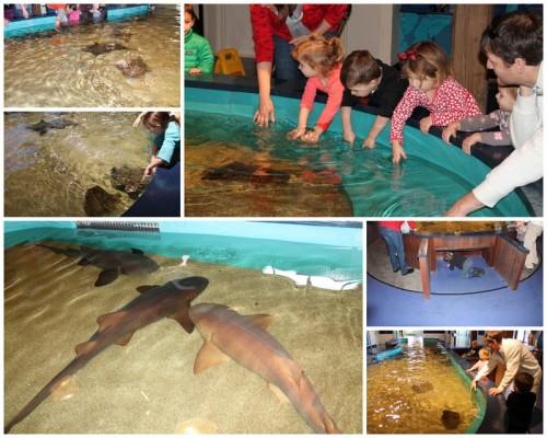 Maritime Aquarium4