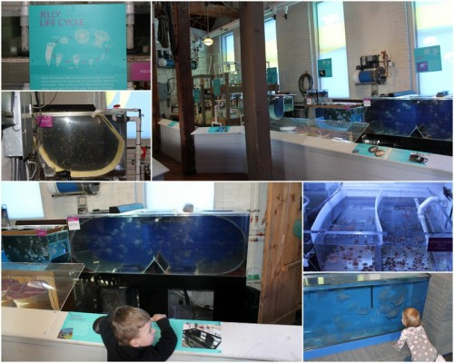 Maritime Aquarium5