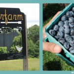 Berry Picking at Auerfarm
