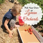 Pick Your Own at Lyman Orchards