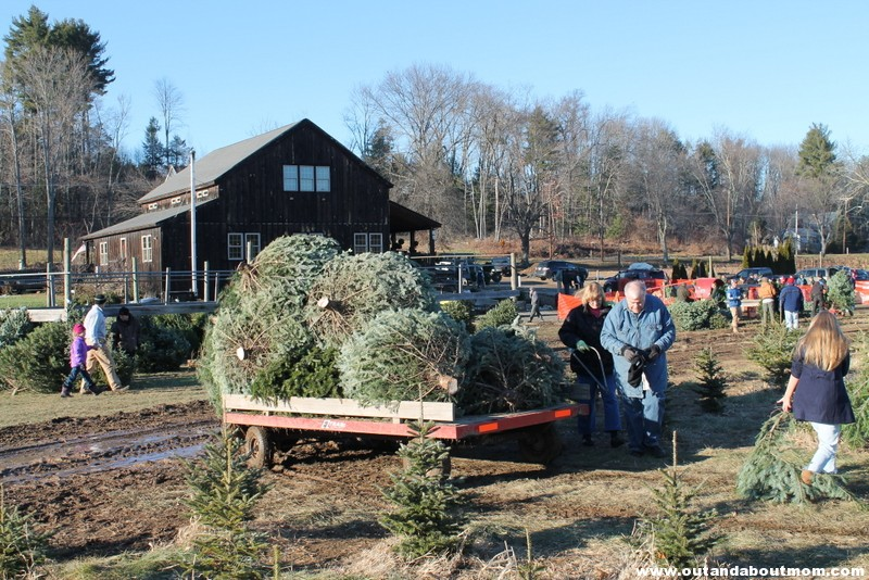 Coward's Farm_Out and About Mom_Christmas Tree (11)
