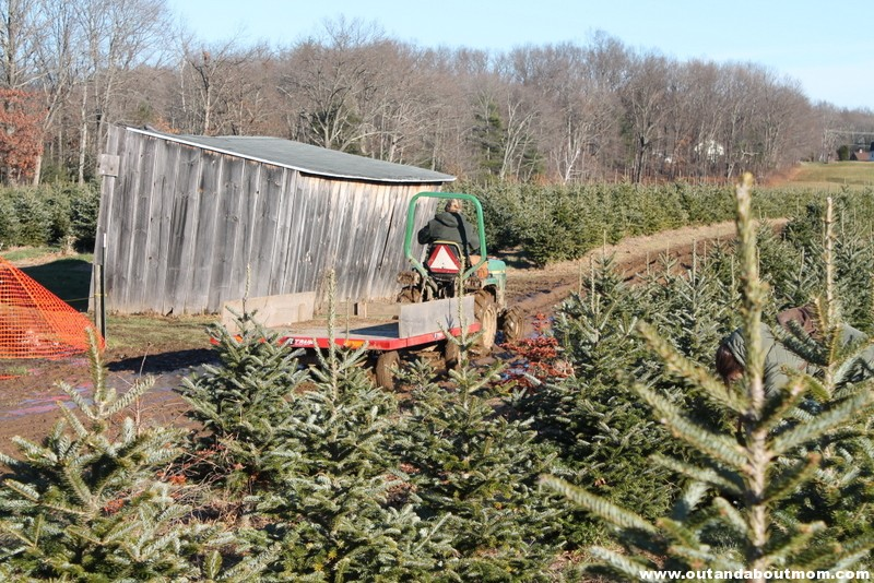Coward's Farm_Out and About Mom_Christmas Tree (8)