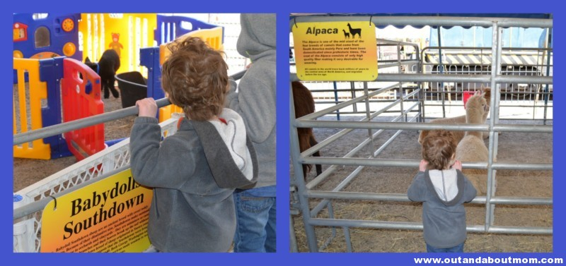 Day Out With Thomas Petting Zoo 4