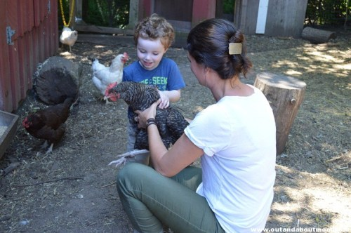 Visiting with friendly chickens at Open Farm Day at Common Ground in New Haven, CT