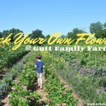 Pick Your Own Flowers at Gutt Family Farm in Glastonbury