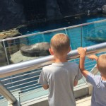 A New Adventure at Mystic Aquarium