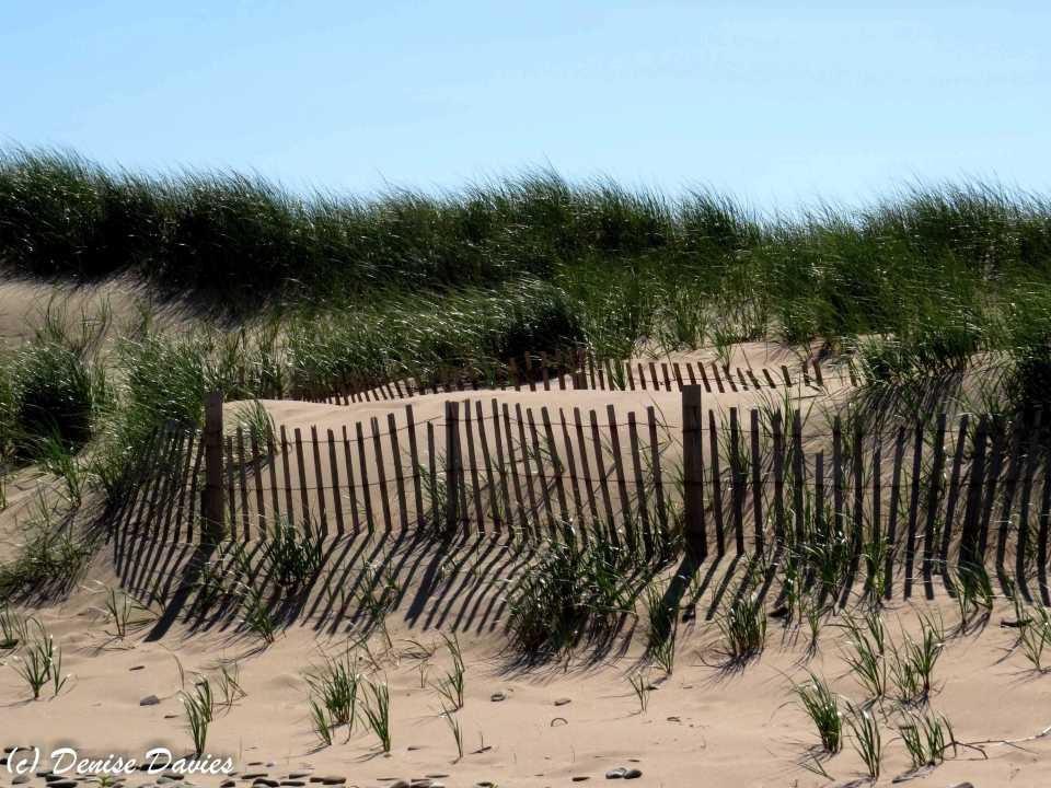 Sun and shadow on the dunes, Inverness Beach