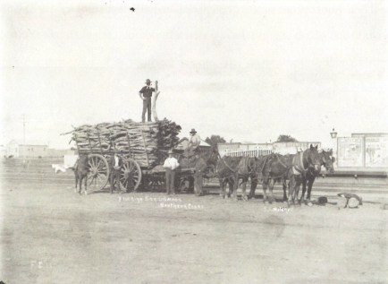 Trucking Sandalwood Southern Cross 1909