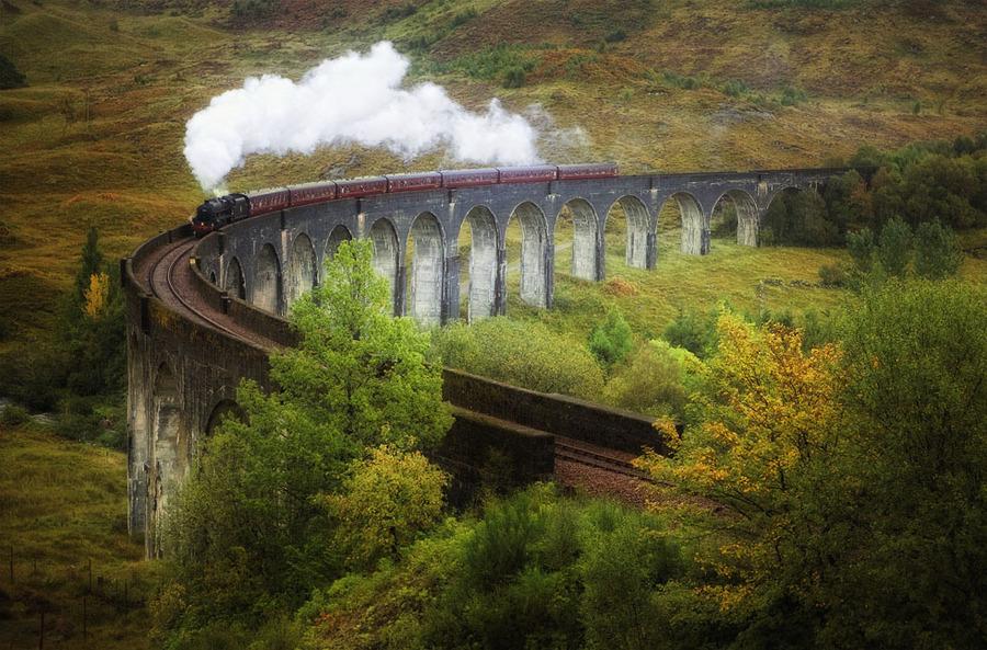 To Hogwarts | forest, bridge