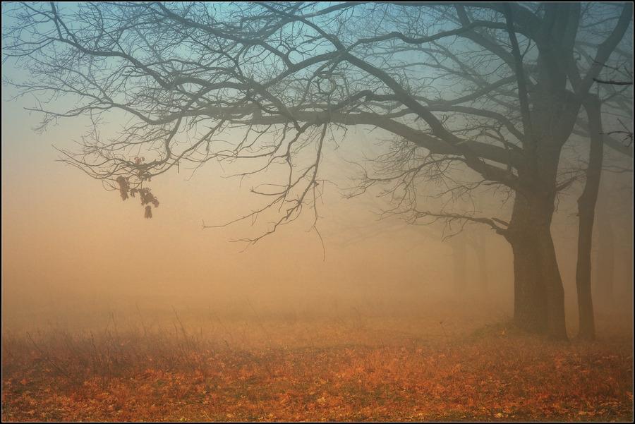 Image result for autumn fog