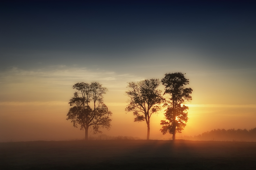 Warm morning | trees, dawn