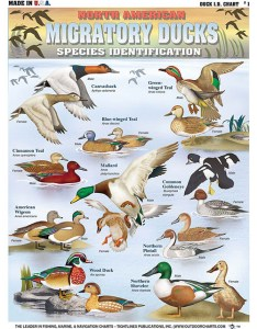Quick reference field guide for identification of migratory ducks  must have any hunter or bird watcher and so much more only also geece hunting charts from tightlines publications rh outdoorcharts