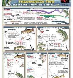 bait rigging and knot tying techniques for inshore freshwater bass catfish and crappie [ 1200 x 1550 Pixel ]