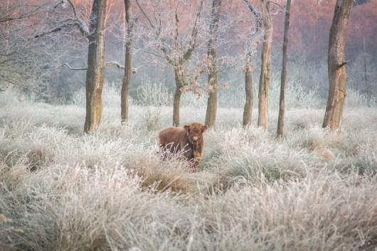 Witte Veen. Foto: Vincent Croce