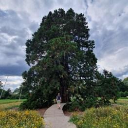 Sequoia Arcen Kasteeltuinen