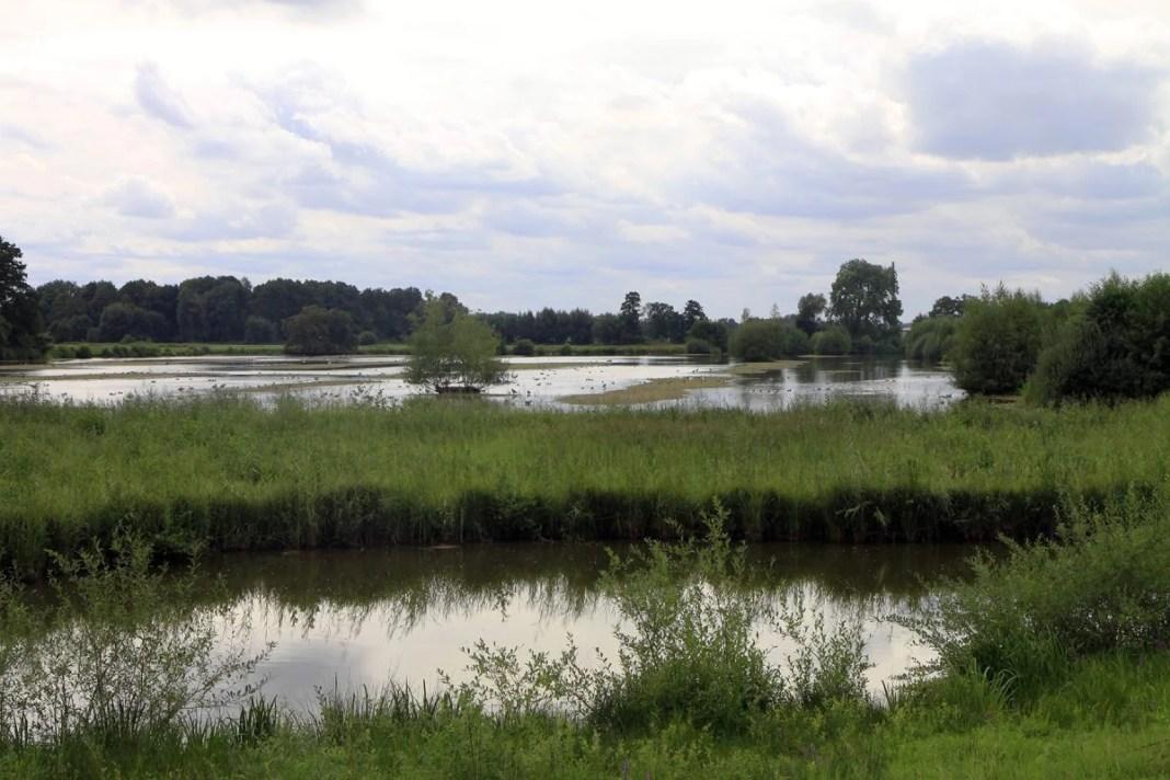 Het vogelgebied van Steinhorster Becken
