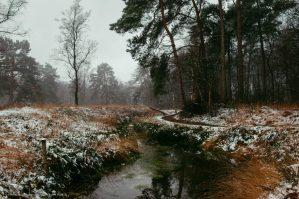 Wolfhezerheide. Foto: Edwin Hagenouw