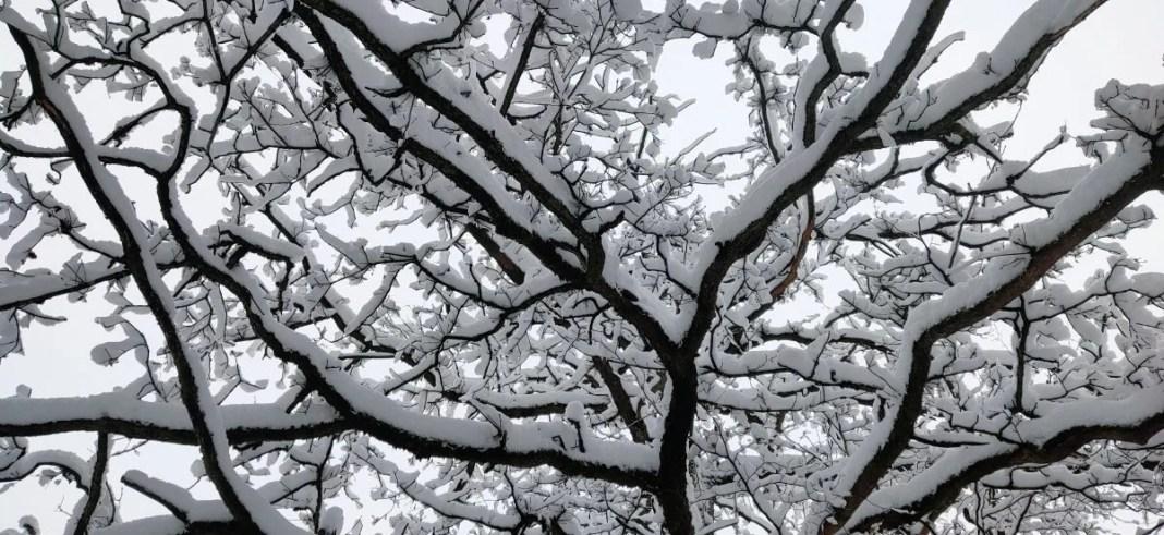 Dikke laag sneeuw op takken