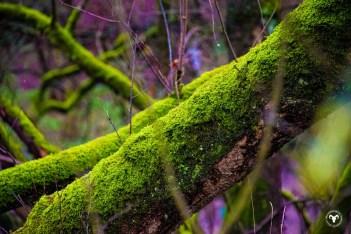 De natuur bij Heelsum