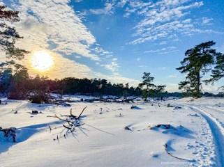 Nationaal Park De Hoge Veluwe. Foto: Edwin Hagenouw