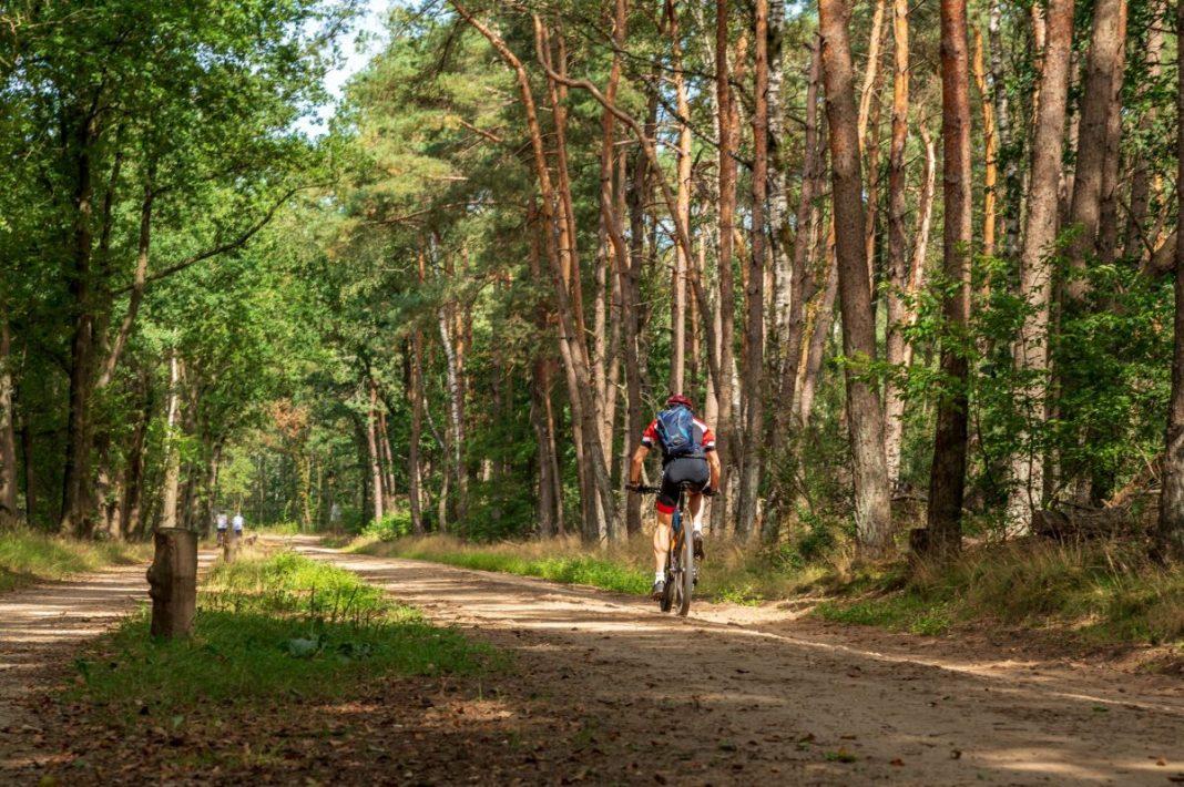 Ontdek de Sallandse Heuvelrug op de fiets. Foto: Ellen van den Doel